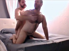 two muscle bear having fun